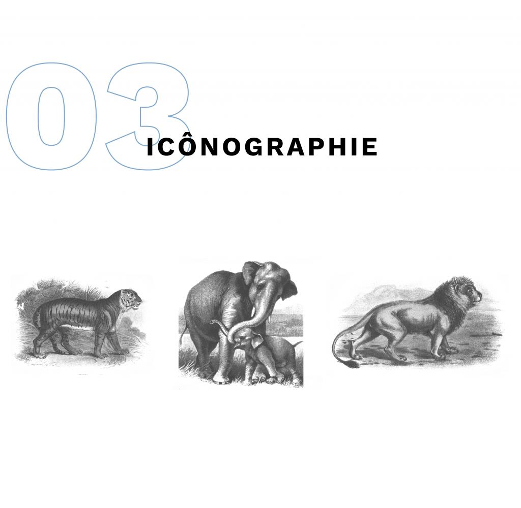 icônographie de l'exposition Mammalia, 3 gravures de tigre, éléphants et lion